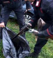 I cani salvati dai Carabinieri le armi e i collari elettrici sequestrati (5) ok
