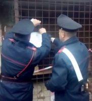 I cani salvati dai Carabinieri le armi e i collari elettrici sequestrati (6) ok