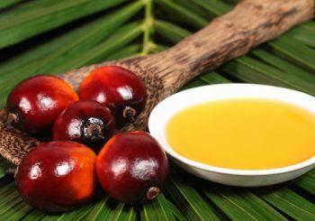 Stop all'olio di palma