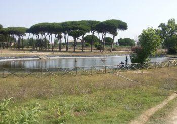 """Villa Guglielmi: """"Presto ripristino pompa dell'acqua del laghetto"""""""