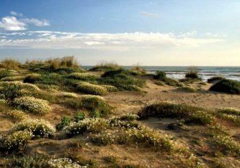 """Bonifica alle dune con """"Fare Focene"""" il 15 settembre"""