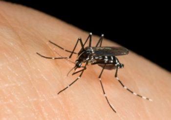Chikungunya, Comune predispone nuove disinfestazioni