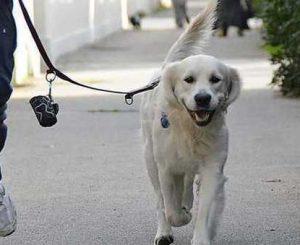 Comune animalista senza contenitori per deiezioni canine?