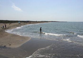 Erosione duna Focene, Wwf: a rischio ecosistema oasi