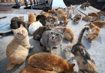 Colonie feline, Ferreri: parte il censimento comunale