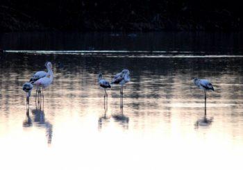 Corso di ornitologia all'Oasi di Macchiagrande