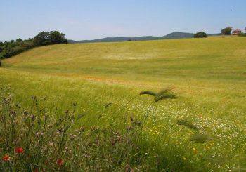 Severini e Baccini: Pizzo del Prete va difesa, riconvocare Commissione speciale