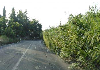 Maccarese, via della Muratella da mettere in sicurezza