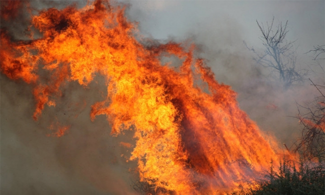 Fiumicino, violento incendio in una falegnameria: distrutto capannone