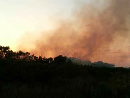 incendio pineta 2